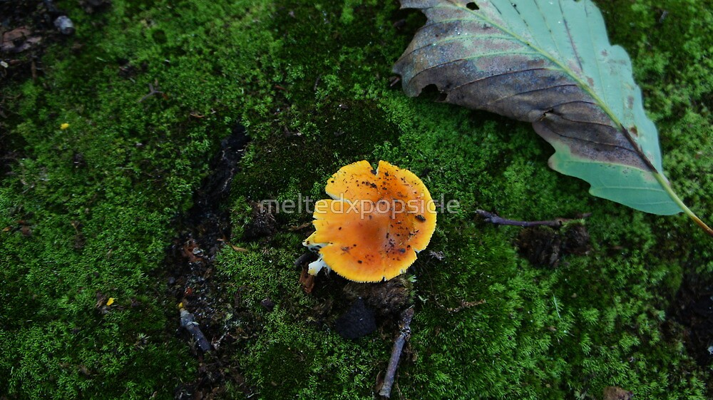 Orange Mushroom by Jessica Liatys
