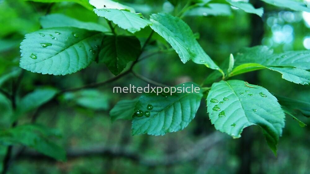 Dew Drops by Jessica Liatys