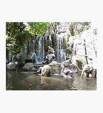 Elephant Splash Party Photographic Print