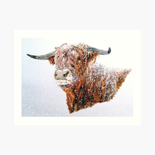 Snowy Highland Cow in Falling Snow Art Print