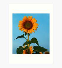 Sunflower Portraits #1 Art Print