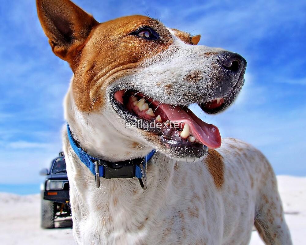 Australian Cattle Dog On Beach by sallydexter