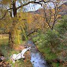 Autumn mountain stream by Rudi Venter