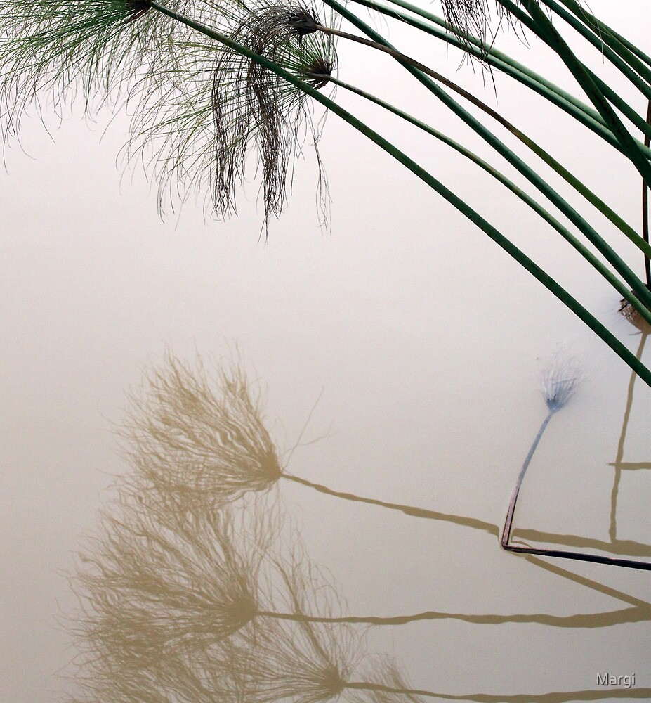 Reflective by Margi