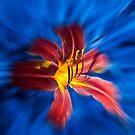 Aqua Lily by Denise Abé