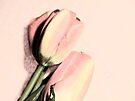 Pastel Tulips by Denise Abé