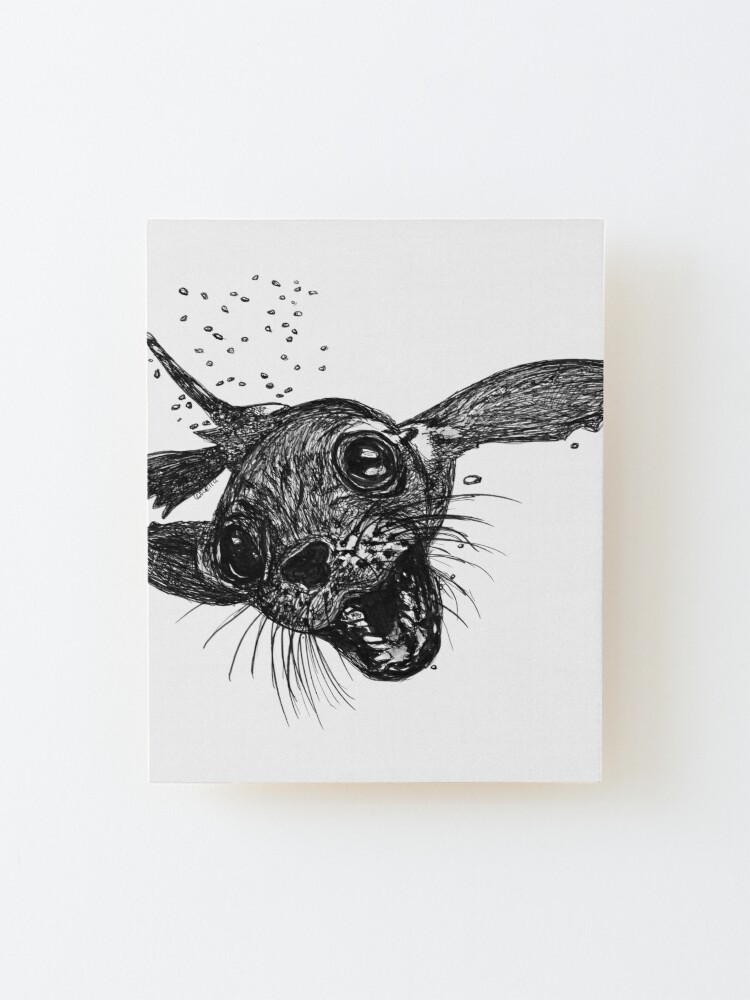 Alternate view of Dom the Australian Fur Seal  Mounted Print