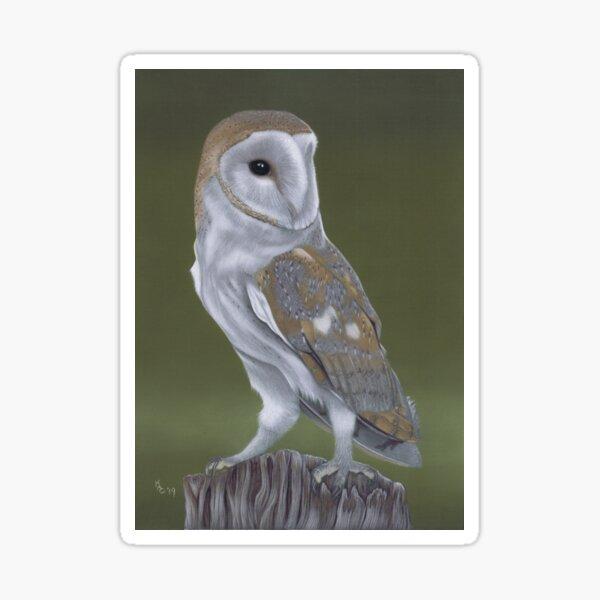Barn Owl bird Sticker