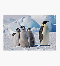 Snow Hill Island Emperor Penguin Rookery Photographic Print