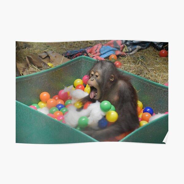 Orangutan Redd at the National Zoo Poster