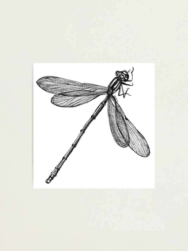 Alternate view of Eve the Dragonfly on the way up Photographic Print