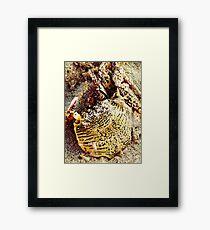 Tiger Look-A-Like? Framed Print