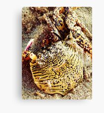 Tiger Look-A-Like? Canvas Print