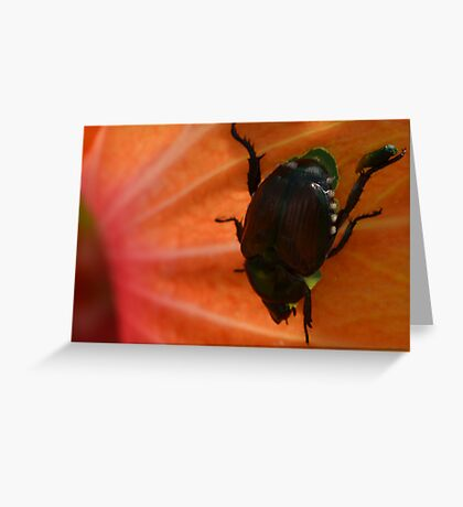 Baby Beetle on its Mother's Leg Greeting Card