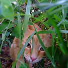 I can see you. by Toby  hefford