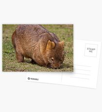 Wombat Postcards