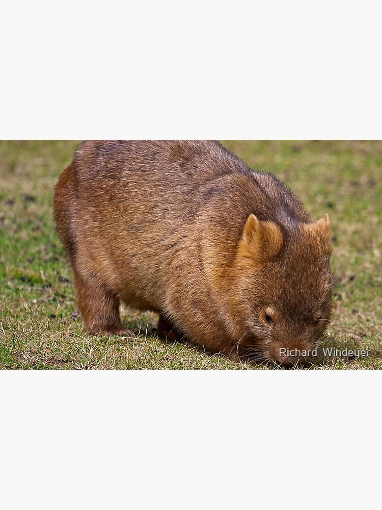 Wombat by RICHARDW