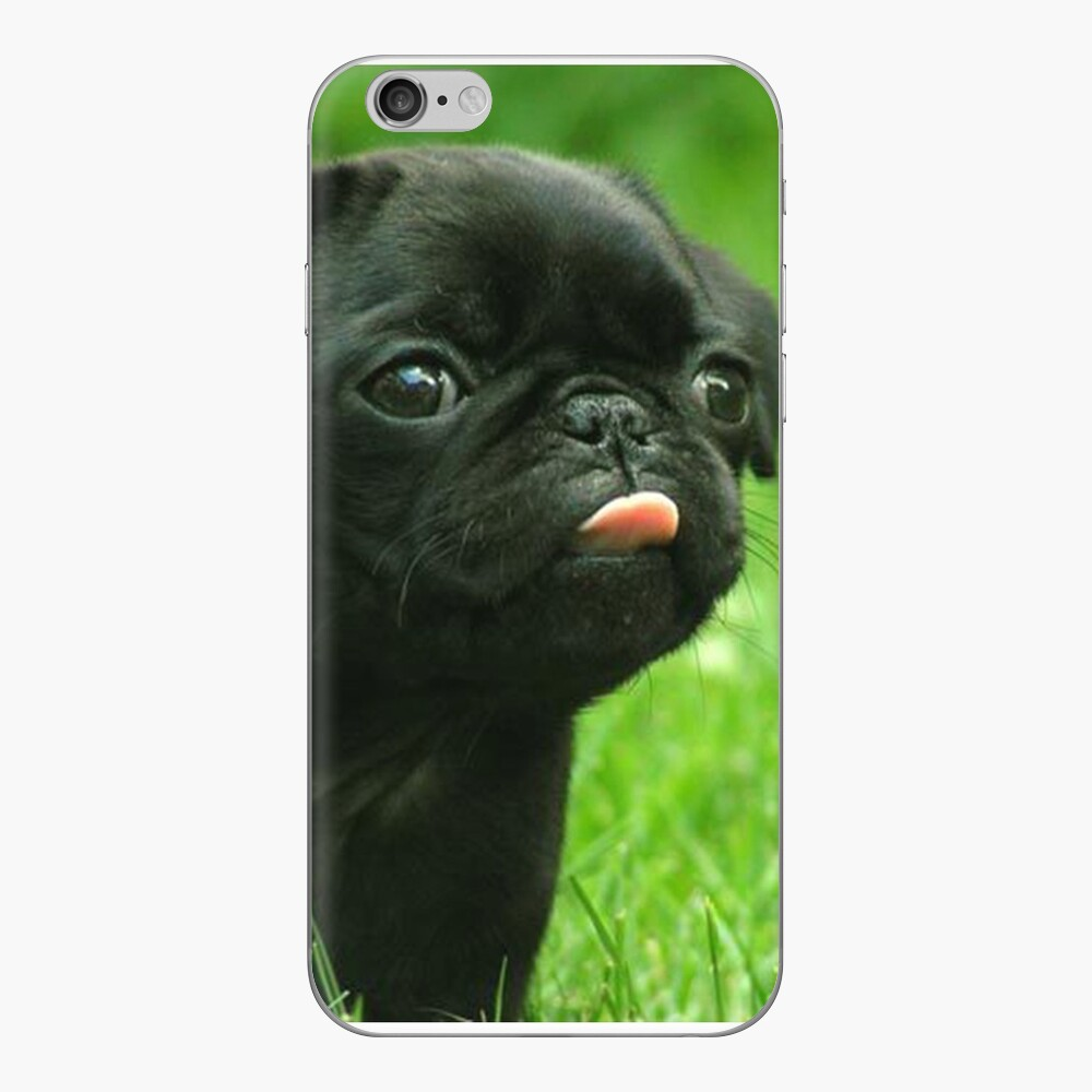 Schwarzer Mops iPhone Klebefolie