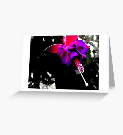 Purple and Pink Greeting Card