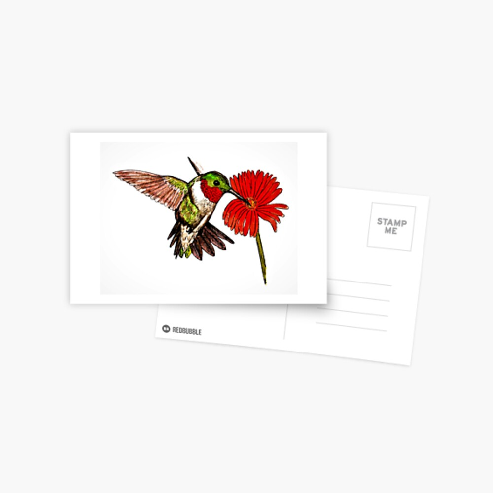Humming Bird and Flower - Postcard Postcard
