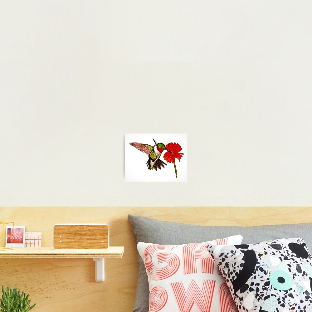 Humming Bird and Flower - Wall Art Photographic Print