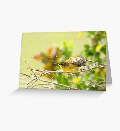 Raindrops keep falling - sunbird bathing. Greeting Card