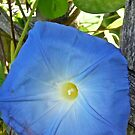 Blue flower by Shulie1