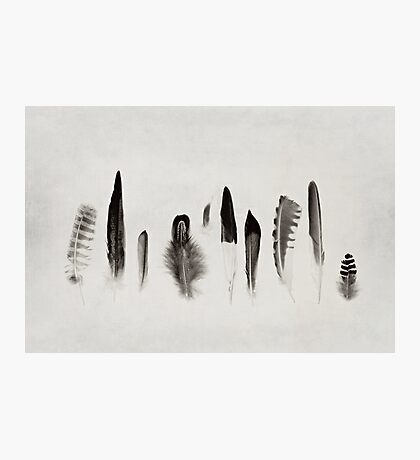 Feather Study no. 3 Photographic Print