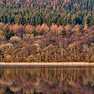 Perfect Day by John Dewar