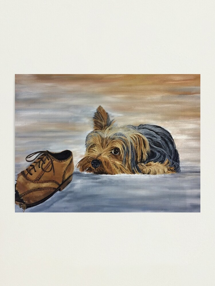Alternate view of Naughty Yorkshire Terrier - Wall Art Photographic Print