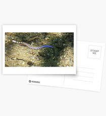 Water snake Postcards