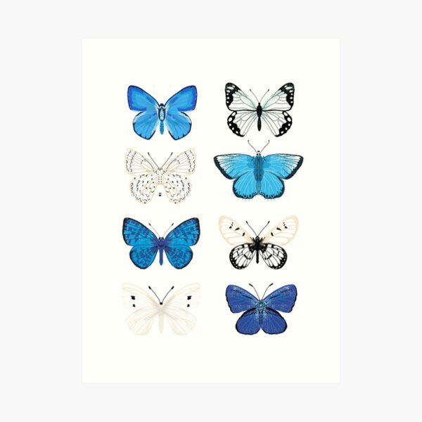 Blue and white Butterflies - butterfly sticker pack, butterfly sticker pack, butterflies stickers, butterfly stickers, moth art, moth Art Print