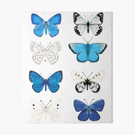 Blue and white Butterflies - butterfly sticker pack, butterfly sticker pack, butterflies stickers, butterfly stickers, moth art, moth Art Board Print