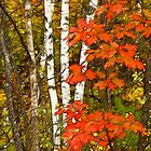 October Fling by Bill Morgenstern