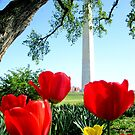 Spring in DC by MEV Photographs