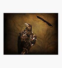 Young Bald Eagle Photographic Print