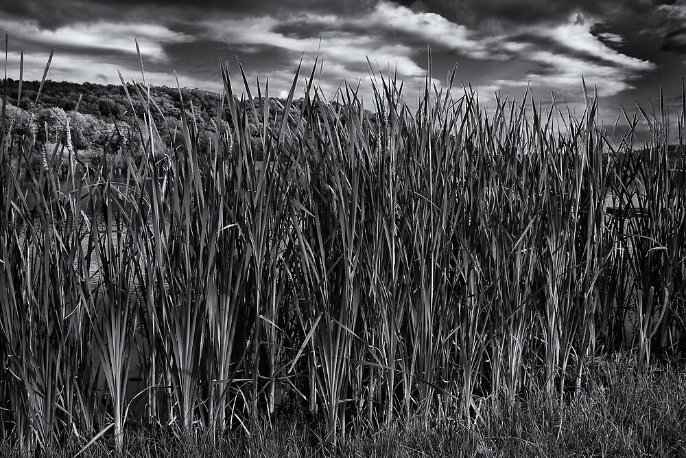 Cat Tails by GPMPhotography