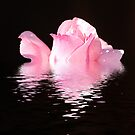 Reflections of Pink by KarDanCreations