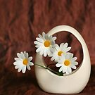Bucket of Daisies by Aase