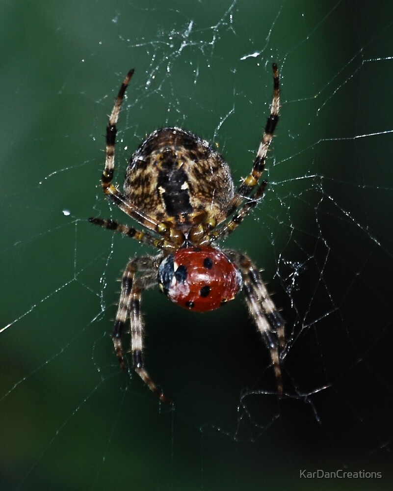 Orb Weaver's Lunch by KarDanCreations