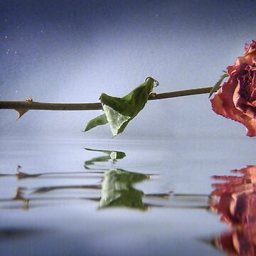Floating Rose by de3euk