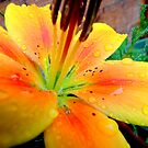 Orange/Yellow Lilly by Livvy Young