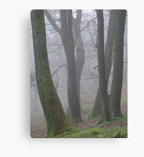 Tree trunks in the mist Canvas Print