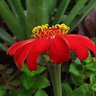 Red Flower - North Carolina by glennc70000