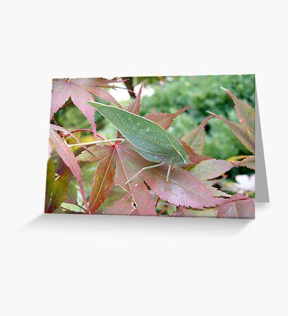 Katydid on a Japanese Maple Greeting Card