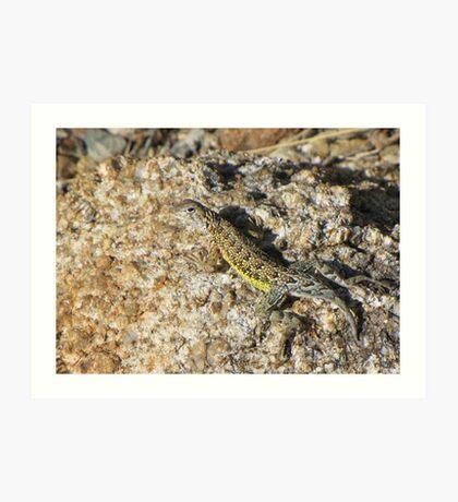 Elegant Earless Lizard ~ Male Art Print