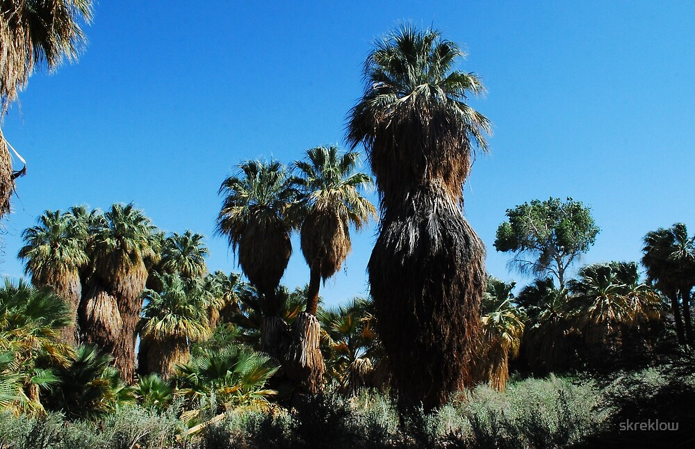 Lush Oasis by skreklow