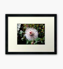 Dandelion Look-a-like Framed Print