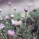 Miniature Pink World by Astrid Ewing Photography