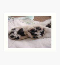 Chloe's Paws Art Print